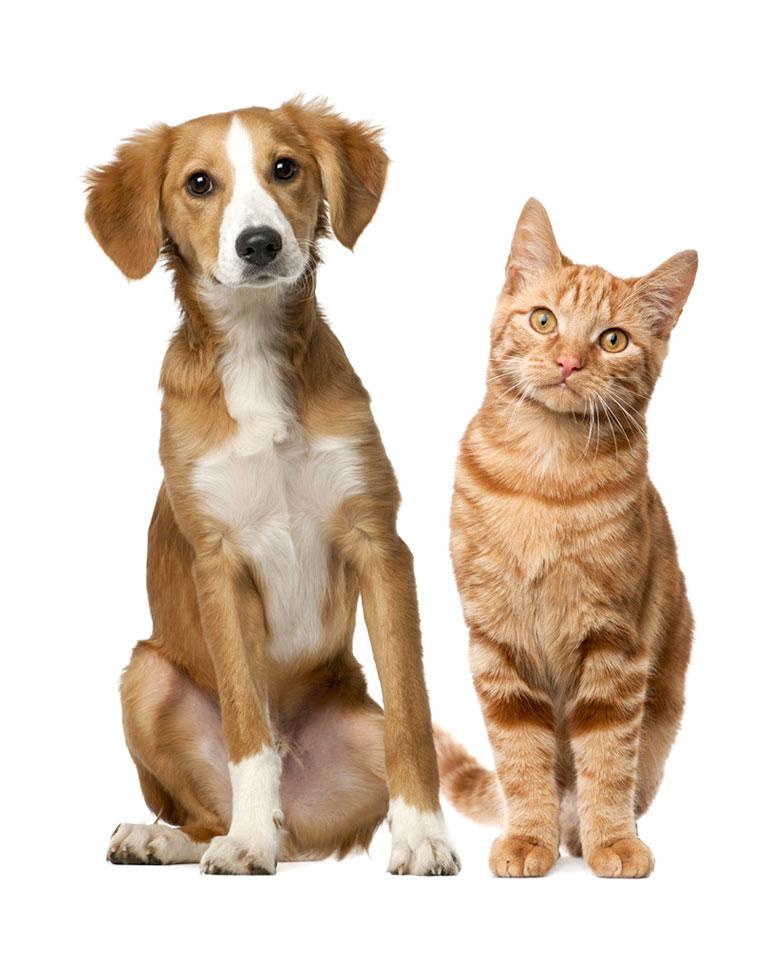 Precious Pets Cavan Kennels Cattery Farm