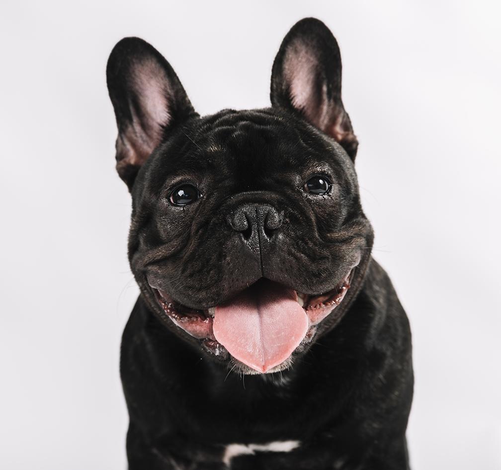Black Dog Precious Pets Cavan Kennels Cattery Farm