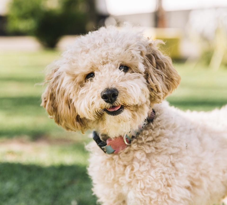 Fluffy Dog Precious Pets Cavan Kennels Cattery Farm