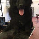 Black Dog Precious Pets Cavan Grooming
