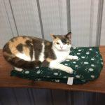 Cat Precious Pets Cavan Cattery