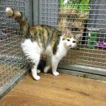 Cats Precious Pets Cavan Cattery