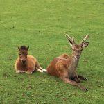 Dear Precious Pets Cavan Animal Farm