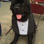 Big Dog Precious Pets Cavan Grooming