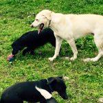Happy Dogs Precious Pets Cavan Kennels