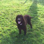Smiling Dog Precious Pets Cavan Walking Field