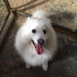 Smiling Dog Precious Pets Cavan Grooming