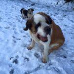Dogs in Snow Precious Pets Cavan