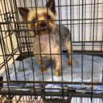 Dog Precious Pets Cavan Kennels