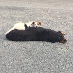 Dogs Precious Pets Cavan Grooming