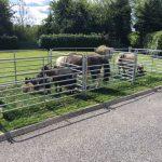 Farm Precious Pets Cavan