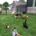 Group of Dogs Precious Pets Cavan Grooming Kennels