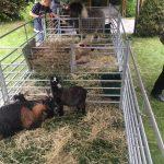 Pen Precious Pets Cavan Farm