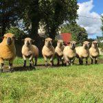 Sheep Precious Pets Cavan Farm